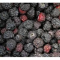 黑树莓(黑水晶)