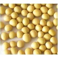 热销大粒饱满 东北大豆 优质豆类 精选品质黄豆