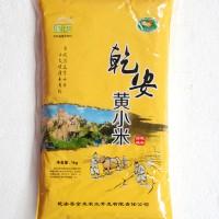 泥花乾安黄小米 东北黄小米 黄小米大量批发