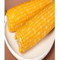 糯玉米单穗(黄糯)