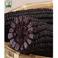 糯玉米单穗(黑糯)